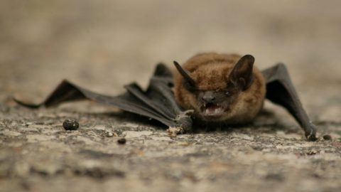 Wuhan Bans Eating Bats And Other Wild Animals