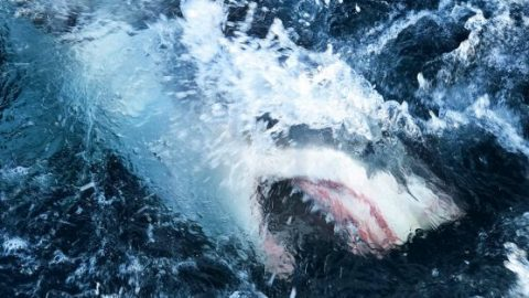 Shark activity on the rise amid COVID-19 pandemic
